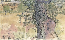 anthony-gross-olive-grove-aragon
