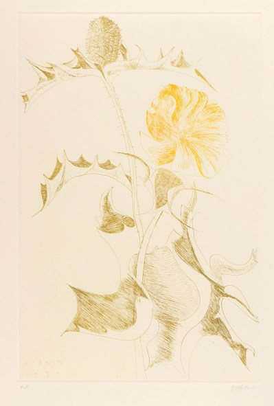 baskin-leonard_green_thistle_yellow_flower